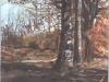 woodlandpathcopyrightbill-martz