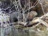 l1960143copyright-bill-martz-river-fishermanauto600
